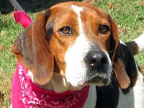 Cruiser was Adopted!