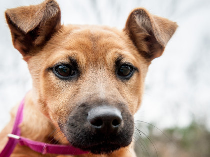 Josie – ADOPTED!