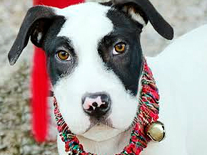 Pilsner was Adopted